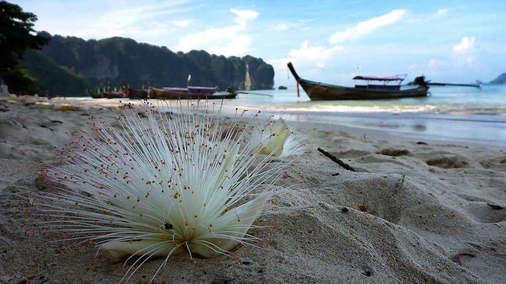 20150530-Thailand-Lumix-0448.jpg